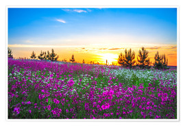 Poster Premium Sunrise over a blossoming meadow