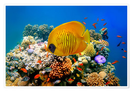 Poster Premium  Tropical reef
