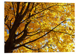 Forex  Golden Autumn Tree II