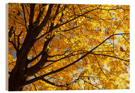 Legno  Golden Autumn Tree II