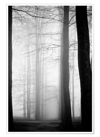 Poster  foggy trees