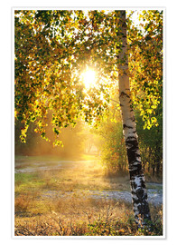 Poster Premium  birch trees in a summer forest