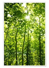 Poster Premium Green forest in sunlight