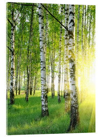 Vetro acrilico  Birches in summer forest