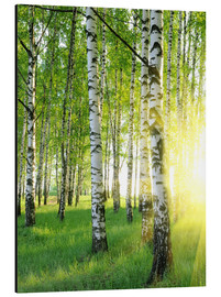 Alluminio Dibond  Birches in summer forest
