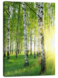Tela  Birches in summer forest