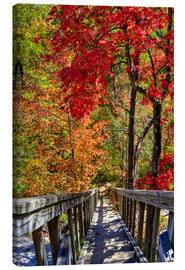 Tela  Wooden stairs in Autumn forest