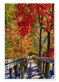 Poster  Wooden stairs in Autumn forest