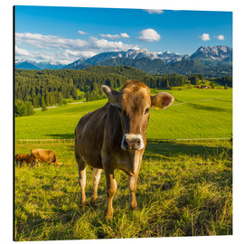 Alluminio Dibond  Funny Cow in the Alps - Michael Helmer