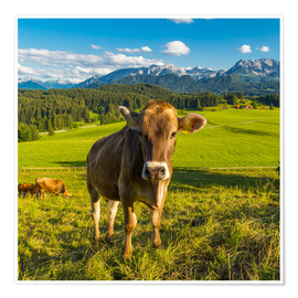 Poster Premium  Funny Cow in the Alps - Michael Helmer