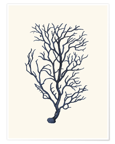 Poster navy coral