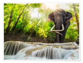 Poster  Asian Elephant