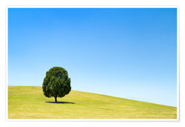 Poster Premium Lonely tree on a green meadow