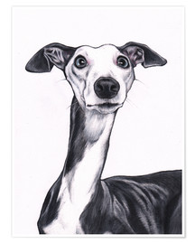 Poster Premium  Whippet, blu e bianco - Jim Griffiths