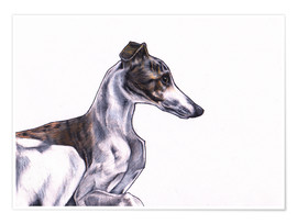 Poster Whippet illustration, colour pencil drawing
