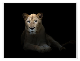 Poster Premium  White Lioness in the dark night