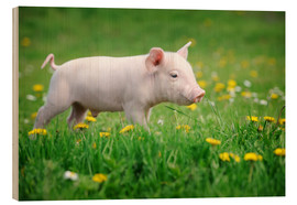 Stampa su legno  Piglets on a spring meadow
