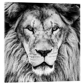 Vetro acrilico  King Lion - black and white