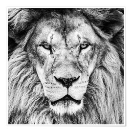 Poster  King Lion - black and white