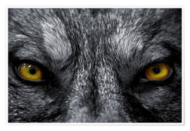 Poster Premium  The evil wolf