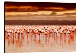 Stampa su alluminio  Flamingos at sunset