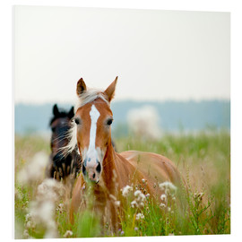 Forex  Haflinger with wildflowers