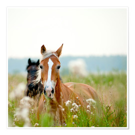 Poster Premium  Haflinger with wildflowers
