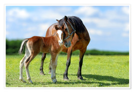 Poster Premium  Mother Love - mare with foal