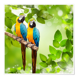 Poster Premium  2 blue and yellow parrot