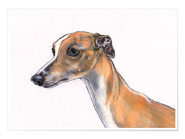 Poster Whippet portrait, Fawn whippet, dog illustration