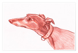 Poster Greyhound pencil drawing white and red colour pencil sketch