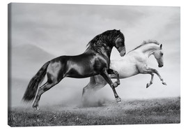 Tela  Horses black and white