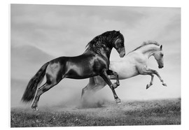Forex  Horses black and white