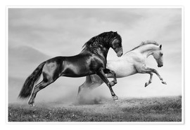 Poster Horses black and white