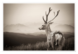 Poster Premium  Stag in the mountains