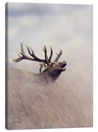 Stampa su tela  The call of the stag