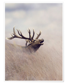 Poster Premium  The call of the stag