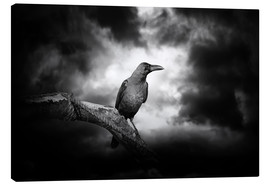 Tela  Raven in the moonlight