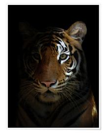 Poster Premium  bengal tiger head in the dark night