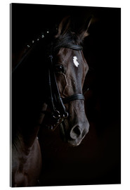 Dressage horse in profile