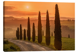 Stampa su tela  Golden Morning - Tuscany - Achim Thomae