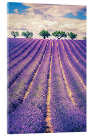 Vetro acrilico  Lavender field with trees in Provence, France