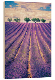 Stampa su legno  Lavender field with trees in Provence, France