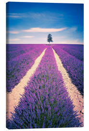 Tela  Lavender field with tree in Provence, France