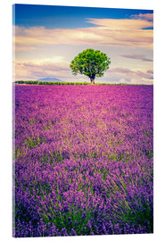 Stampa su vetro acrilico  Lavender field with tree in Provence, France