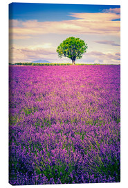 Stampa su tela  Lavender field with tree in Provence, France
