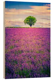 Stampa su legno  Lavender field with tree in Provence, France