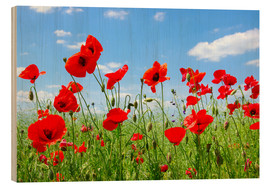 Legno  red poppies on green field