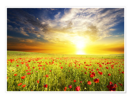 Poster Premium  Field with green grass and red poppies