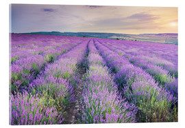 Vetro acrilico  Meadow of lavender on sunset
